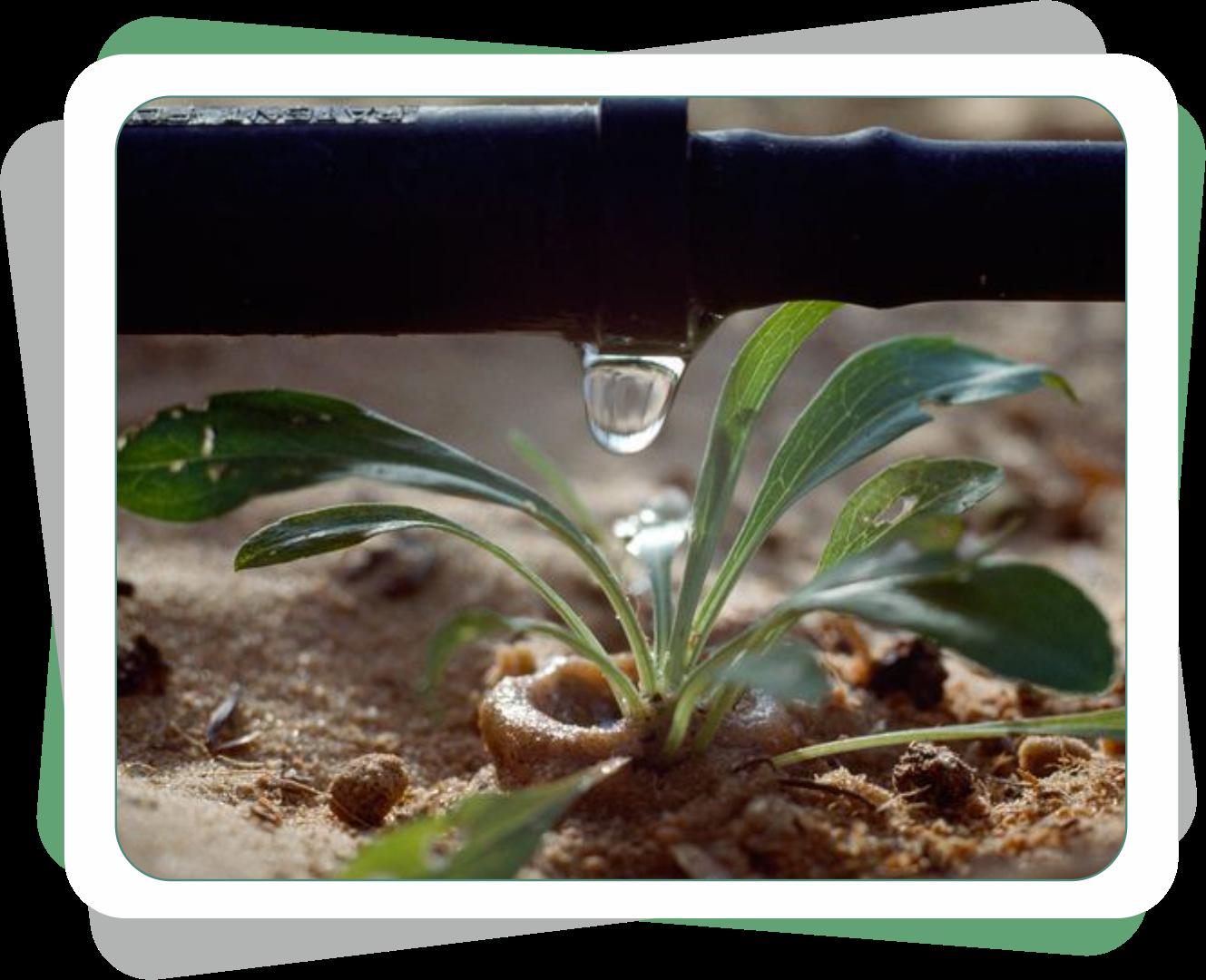 Neden orkide saman bırakır ve nasıl önlenir